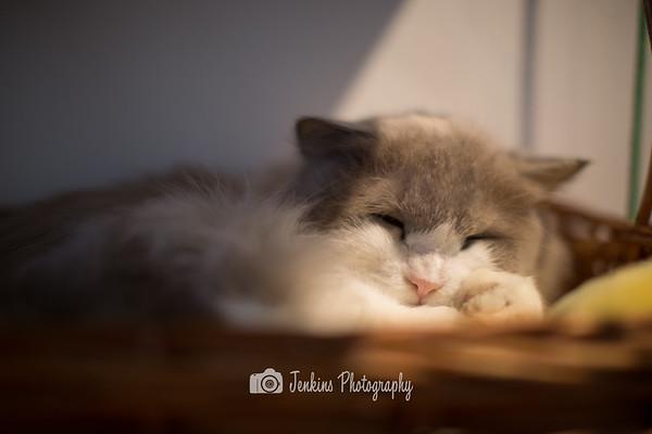 2014-09-13 Cat Cafe