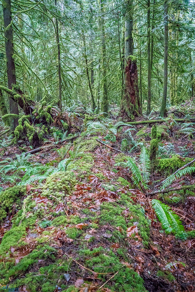 Olympic-National-Forest-0149.jpg