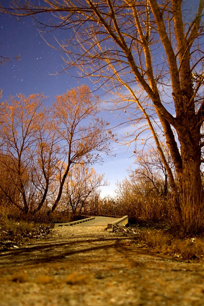 lonely trail.jpg