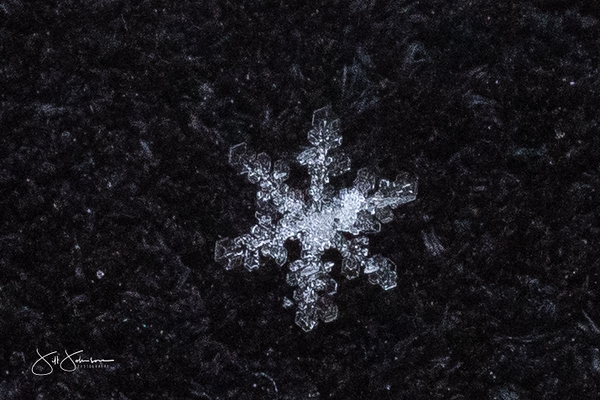 snowflakes-1323.jpg