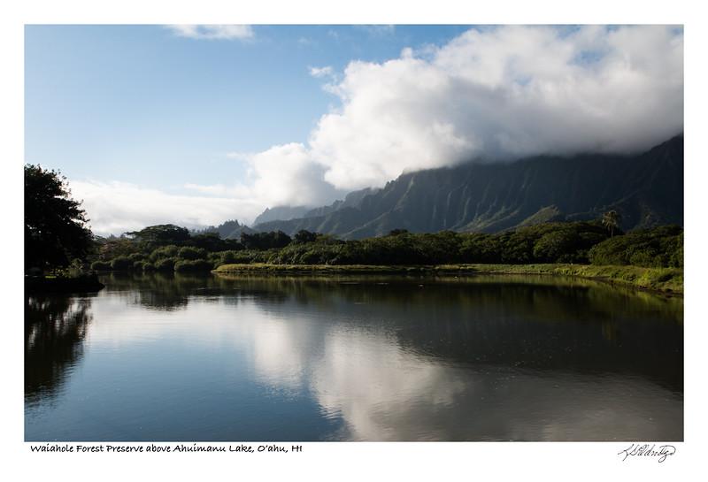 180220_MG_2668 Waiahole Forest behind Ahuimanu Lake O'ahu.jpg