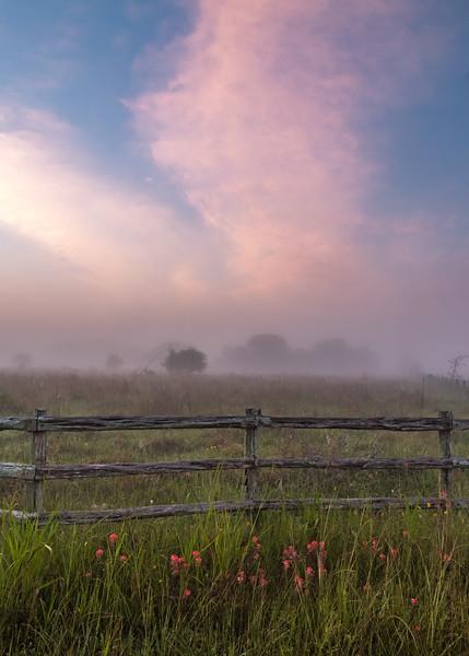 Foggy Floral Sunrise