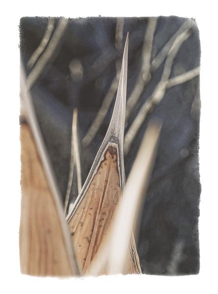 Dead agave in Anza Borrego Desert State Park