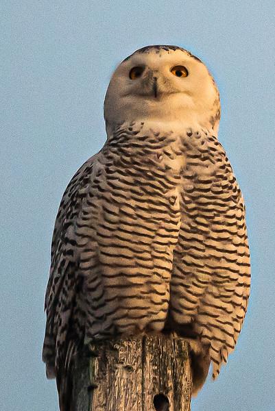 owls-102.jpg