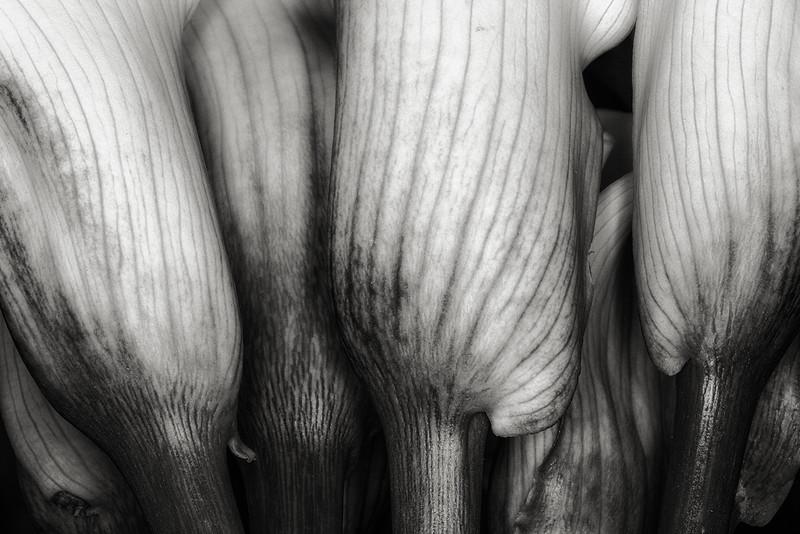 callas-04.jpg