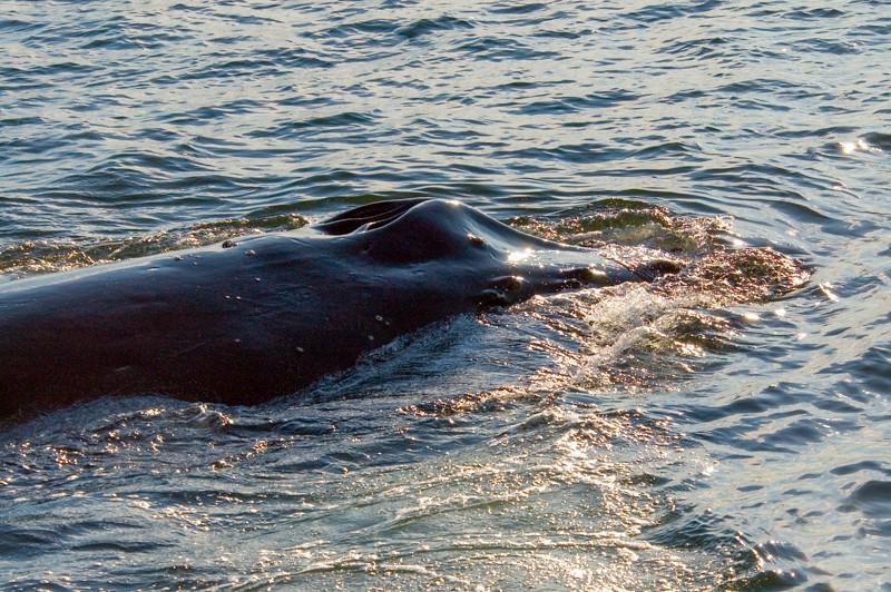 AK_Whales-20.jpg