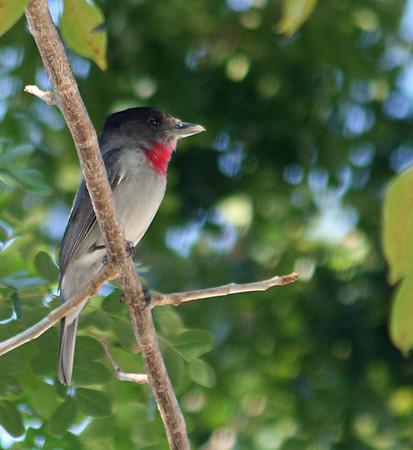 Mexico Birds (32 Species)