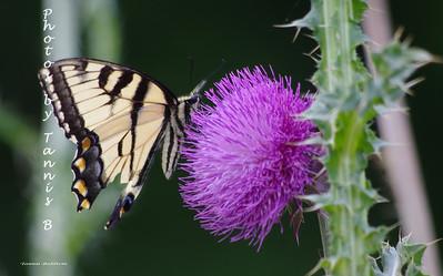 2012-Butterflies and moths
