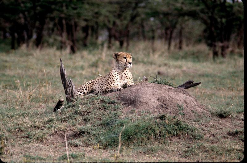 Kenya2_040.jpg