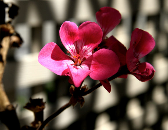 sundayflora0618.jpg