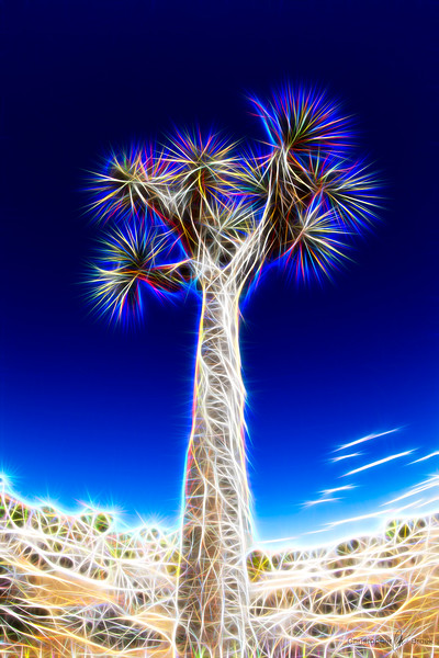 Fractal Joshua Tree Study