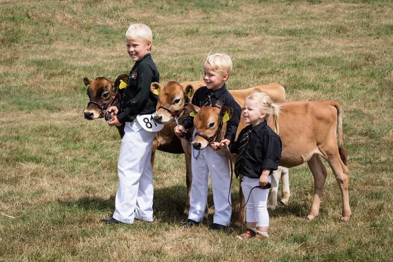 Jersey Cattle Society