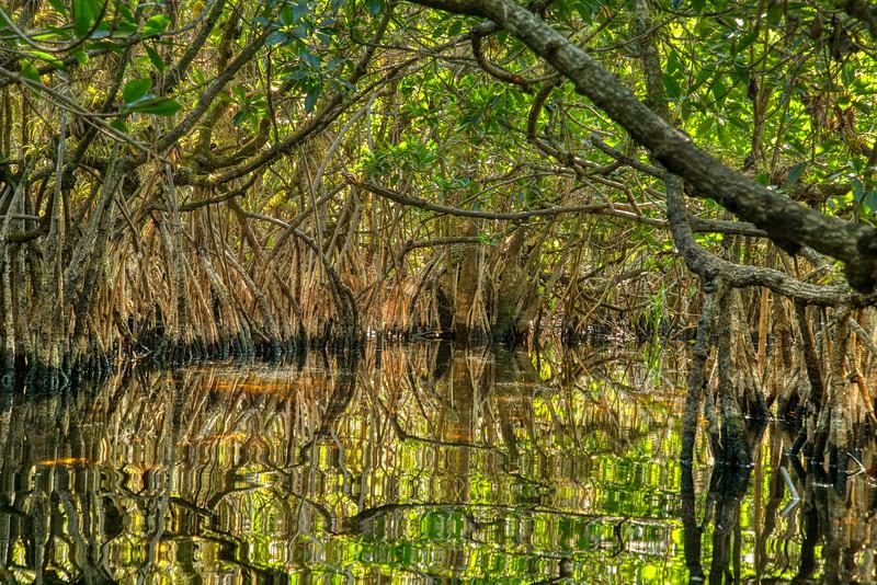 Everglades 2020-19.jpg