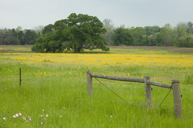 2015_4_3 Texas Wildflowers-7561.jpg
