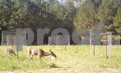 fall-farming-conditions-ripe-in-east-texas-for-planting-wildlife-food-plots