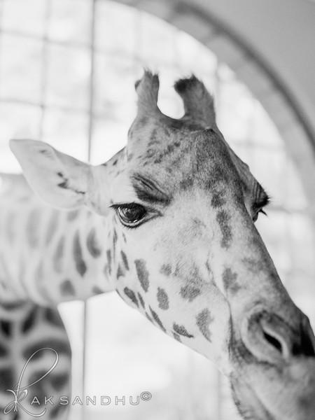 Safari-Africans-095.jpg