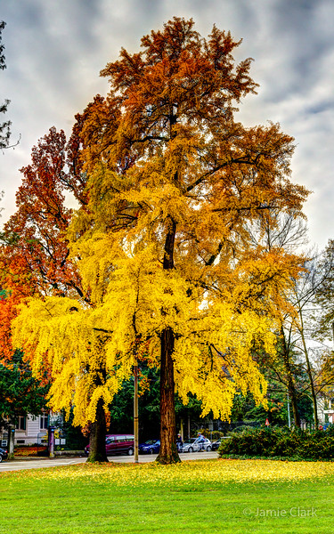 Various stages of autumn. Basel, Switzerland