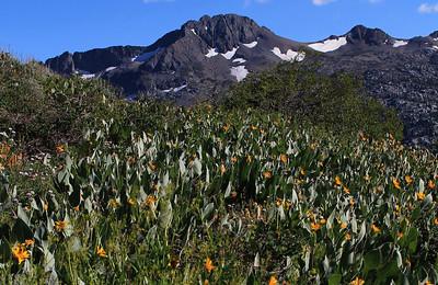 Meiss Meadow Trail - July 21, 2012