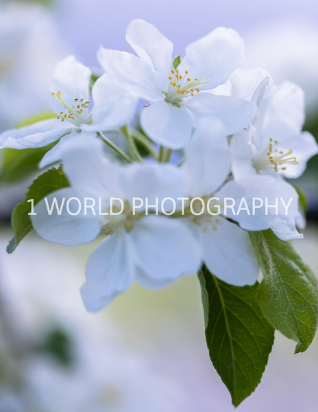 201905152019 Neighborhood Blossoms085--153.jpg