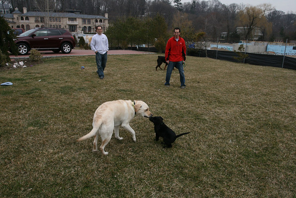 Chip, Harvard and Bagheera