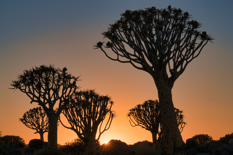 Sunrise in Quiver Tree Forest