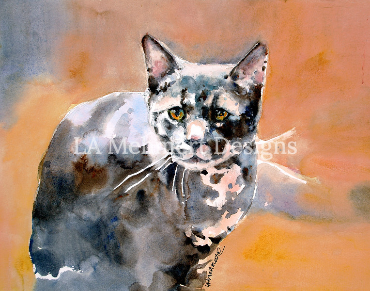 Stevie Cat
