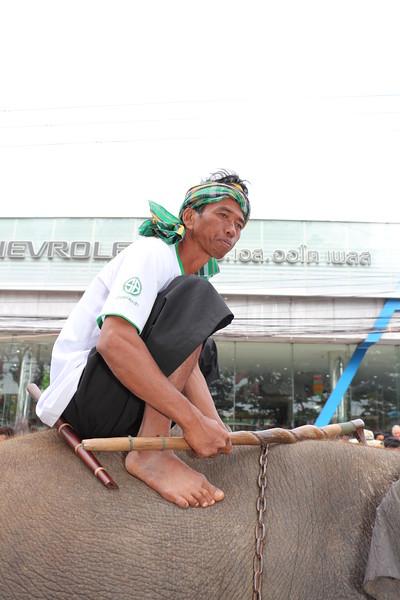 2014-11-14 Surin Elephant Welcome Feast 342.JPG