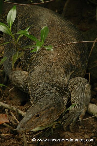 Big Lizard - Melaka, Malaysia
