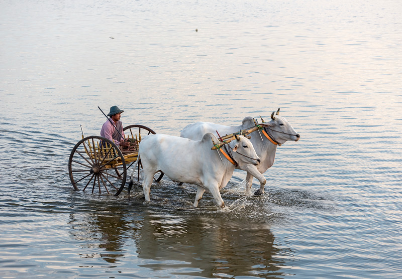 Oxcart, Taungthaman Lake