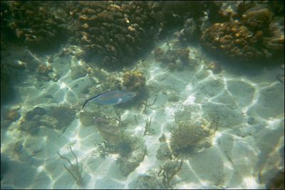 Snorkeling around Leinster Bay