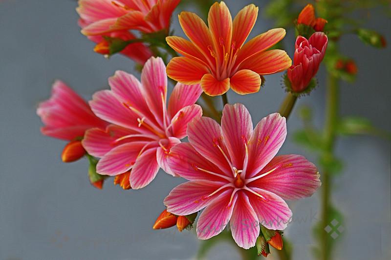 Pink & Orange.jpg
