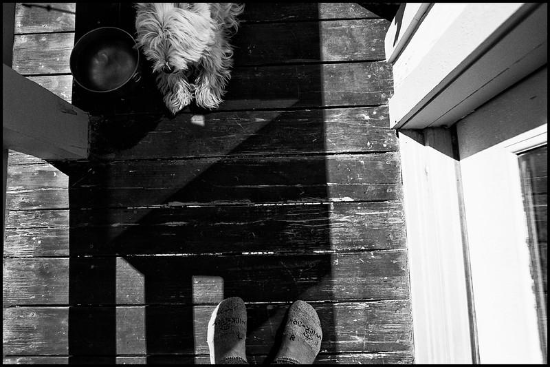 9-Dog-Feet-human-feet Blad Acros.jpg