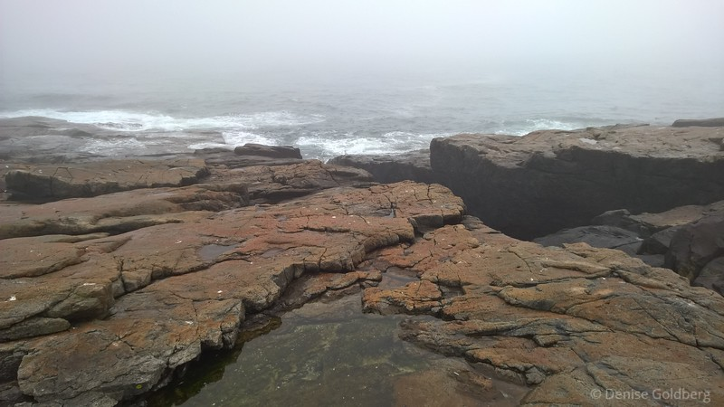 a foggy day on the Schoodic Peninsula