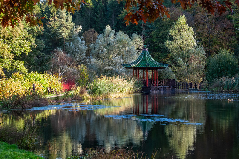Himalayan Garden Oct 18-86.jpg