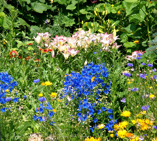 Flower garden in full bloom