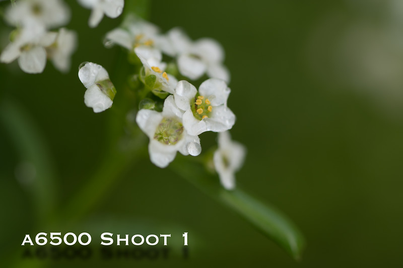 a6500 macro - Shoot 1-18.jpg
