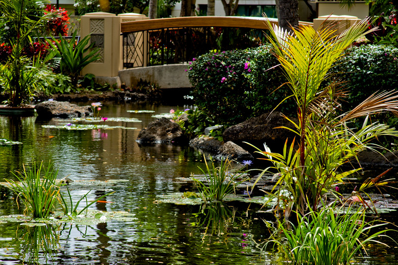 Journey into Oahu Photograph 8