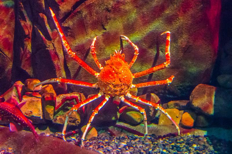 GA Aquarium with Linc, Ali & Abe-144.jpg