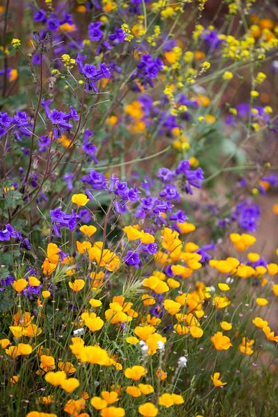 Spring Flowers B-9.jpg