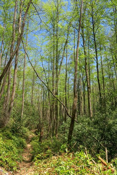 Laurel Creek Trail -- 2,700'