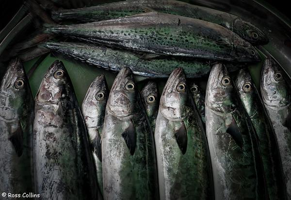 Dawei Fish Market