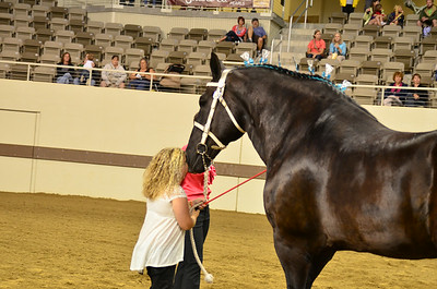 2014 Indiana State Fair Percherons