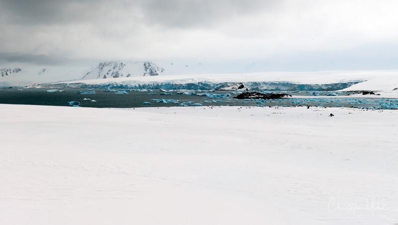 091204_penguin_island_7792.jpg