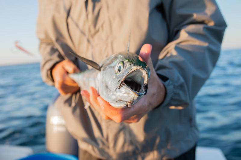 capecodfalsealbacorefishing.bencarmichael (7 of 13).jpg