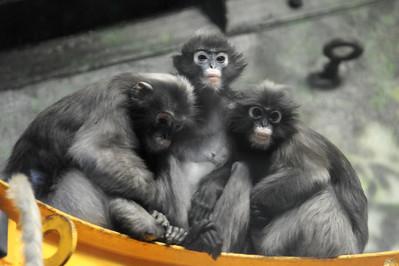 Philadelphia Zoo 11/11/14