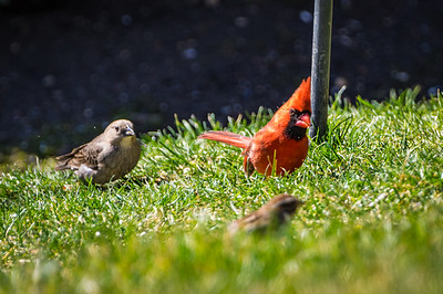 Spring Birding 2017