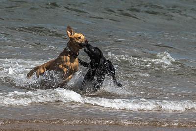 2017-07-16 Sea Dogs