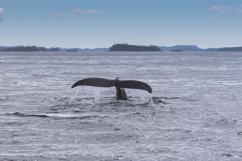 Alaska 2015 - Sitka -  072515-401.jpg
