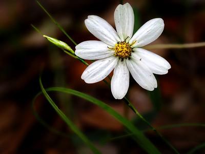 Untamed Flowers