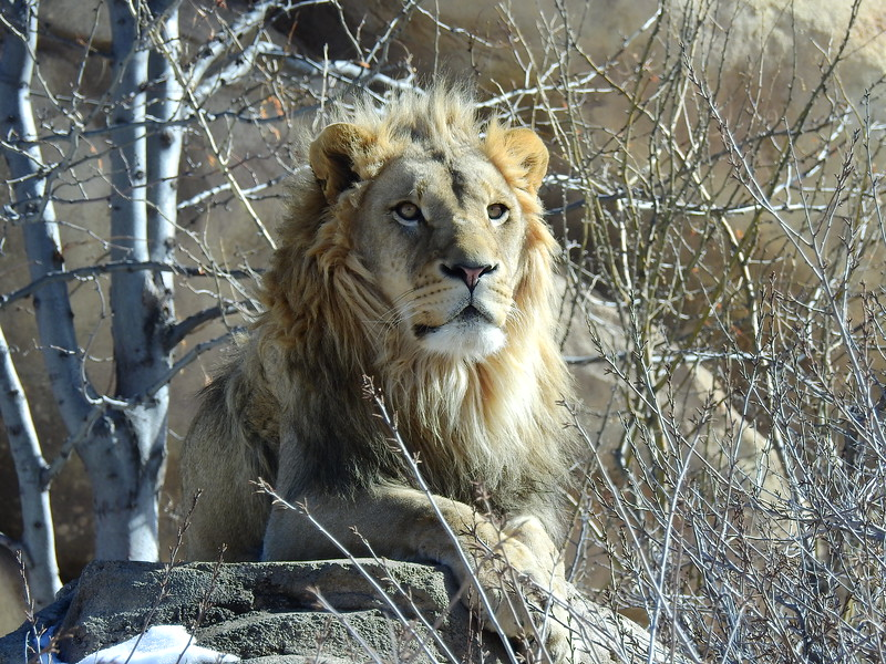Denver Zoo 2019 (1115).JPG